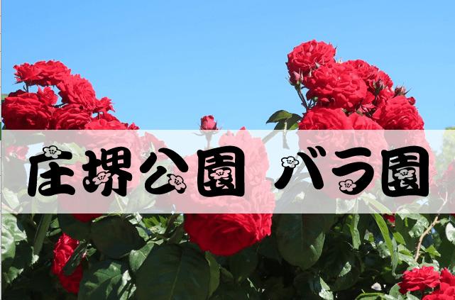 庄堺公園バラ園2020
