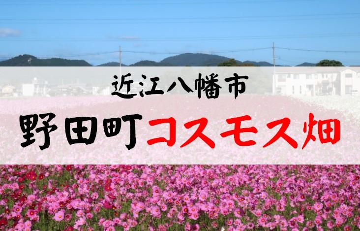 野田町コスモス畑