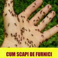 Tu stiai asta? Pulverizeaza cu acest amestec simplu prin casa si nu o sa mai vezi niciodata furnici!