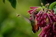 Hummingbird and a hiney bee