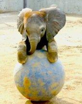 Anak gajah2