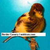 Border Canary