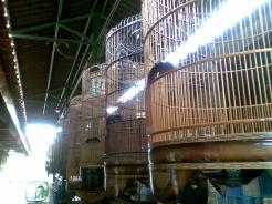 Foto-foto sudut, lorong dan hewan peliharaan yang dijajakan di Pasty Jogja (12)