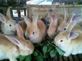Foto-foto sudut, lorong dan hewan peliharaan yang dijajakan di Pasty Jogja (27)
