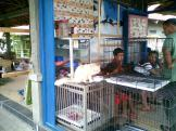 Foto-foto sudut, lorong dan hewan peliharaan yang dijajakan di Pasty Jogja (30)
