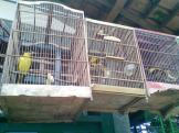 Foto-foto sudut, lorong dan hewan peliharaan yang dijajakan di Pasty Jogja (36)