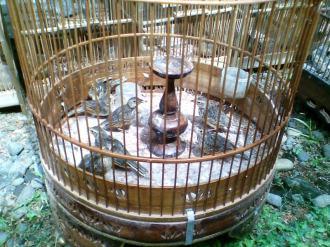 Foto-foto sudut, lorong dan hewan peliharaan yang dijajakan di Pasty Jogja (38)