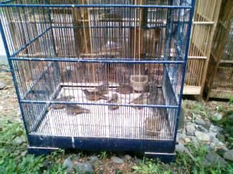Foto-foto sudut, lorong dan hewan peliharaan yang dijajakan di Pasty Jogja (39)