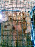 Foto-foto sudut, lorong dan hewan peliharaan yang dijajakan di Pasty Jogja (47)