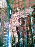 Foto-foto sudut, lorong dan hewan peliharaan yang dijajakan di Pasty Jogja (49)