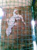 Foto-foto sudut, lorong dan hewan peliharaan yang dijajakan di Pasty Jogja (50)