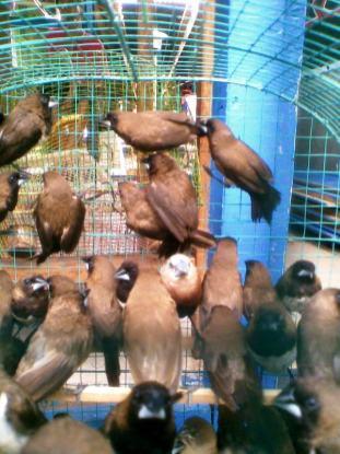 Foto-foto sudut, lorong dan hewan peliharaan yang dijajakan di Pasty Jogja (54)