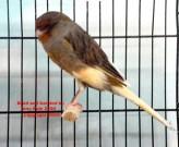 2004__bird_show_076