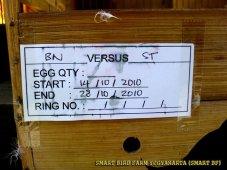 Gambar-gambar lab penangkaran burung kenari SmartBF (10)