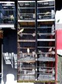 Gambar-gambar lab penangkaran burung kenari SmartBF (18)