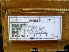 Gambar-gambar lab penangkaran burung kenari SmartBF (33)
