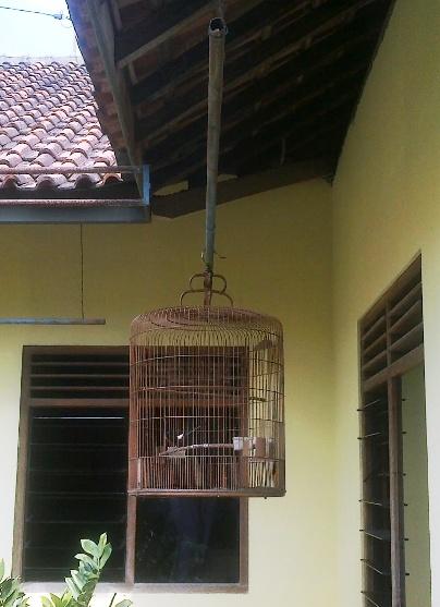 Posisi gantangan jemur burung hingga jam 9.30
