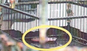Handphone di dasar sangkar burung untuk lomba