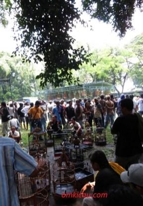 Asyik menge-chas anis merah pada lomba burung Solo Kota Budaya 2012