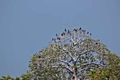 Burung yang berada di Pulau Rambut - foto dokumen Silvia Faradila - ACI