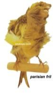 Burung kenari parisian fril