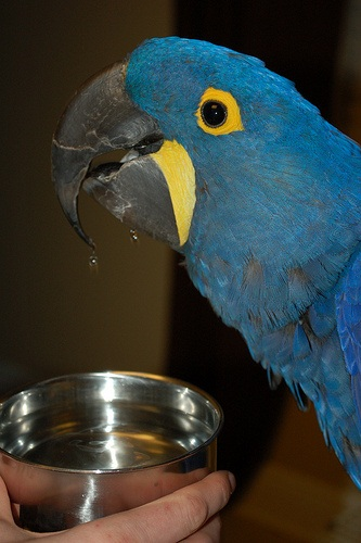 parrot-airbersih