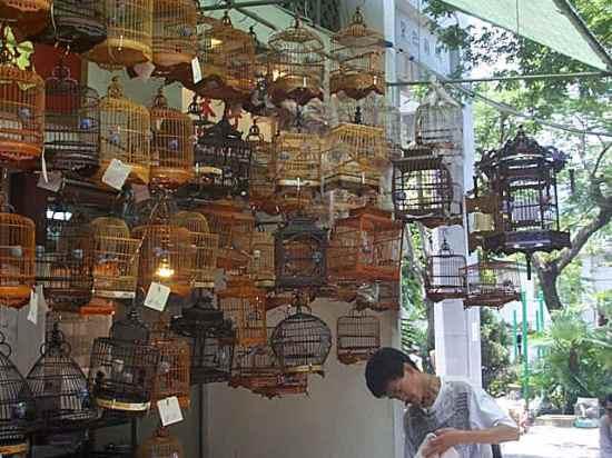 ANEKA SANGKAR PLECI : harus dipilih yang sesuai dan membuat nyaman burung
