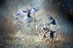Burung yang sedang bermain hujan-hujanan