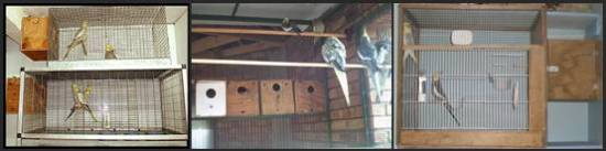 Beberapa bentuk kandang yang digunakan untuk menangkarkan cockatiel