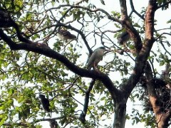 Burung yang berada di kebun raya Bogor