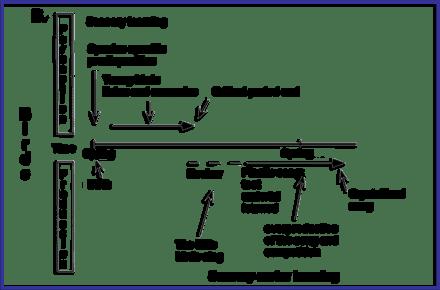 Perkembangan sensormotor pada lagu burung