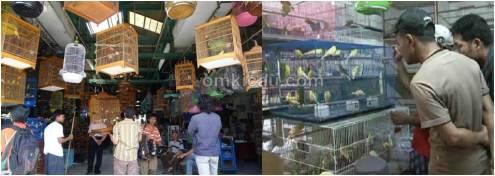 Daftar harga burung di Pasar Pramuka bulan Februari 2014