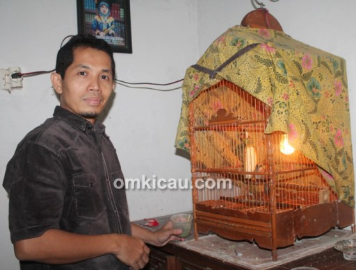 Breeding cucakrowo Royhan BF Jakarta