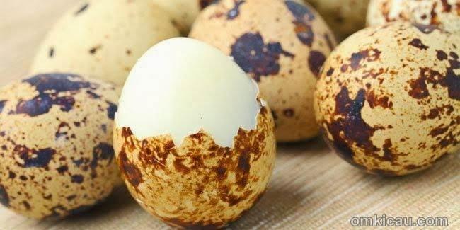 Manfaat telur puyuh bagi burung