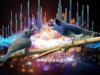 Audio terapi dengan kombinasi suara burung
