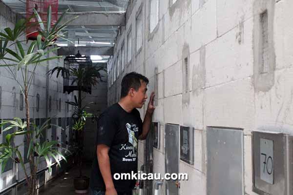 Breeding murai batu Bowo BF Bogor