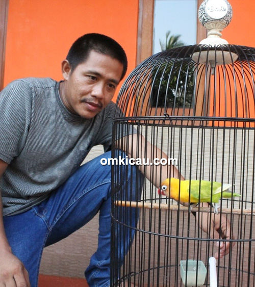 Om Tata dan lovebird Zuviter