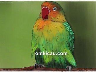 Mengenali penyebab lovebird diare dan cara mengatasinya