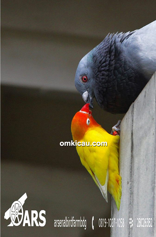 Arsenal Bird Farm