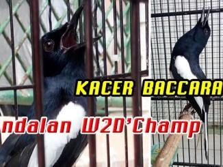 kacer Baccarat