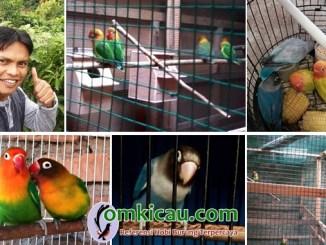 breeding lovebird Rusdika BF