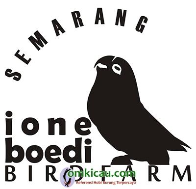 ternak lovebird di Semarang