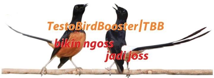 Testo Bird Booster - Bikin Burung Ngoss jadi Joss