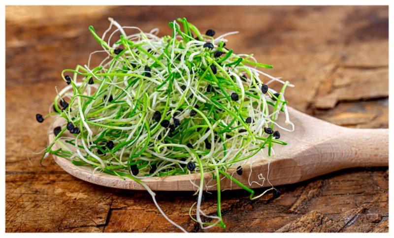 ложка зелень ростки