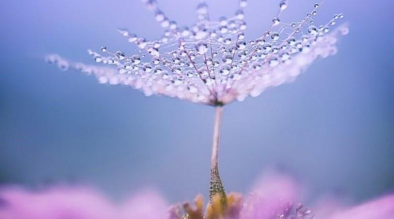 цветок роса капля вода