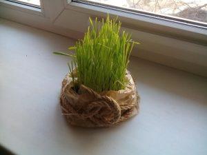 весна трава