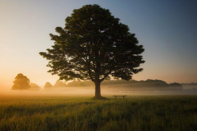 Meditación Plena Mindfulness
