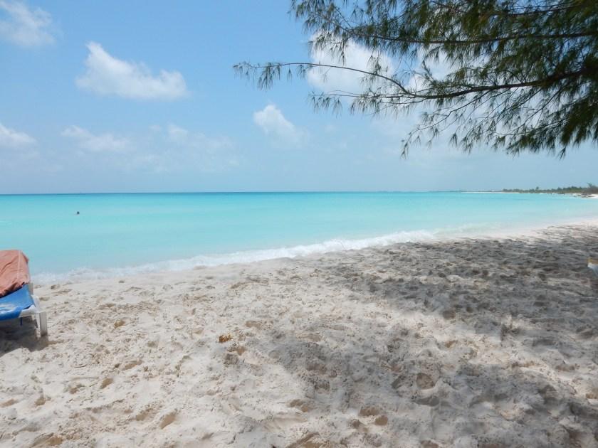 Caribe na veia