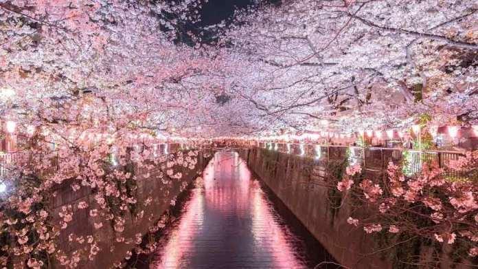 目黒川の桜祭りの屋台の場所はどこ?毎年いつからいつまで出店してる?