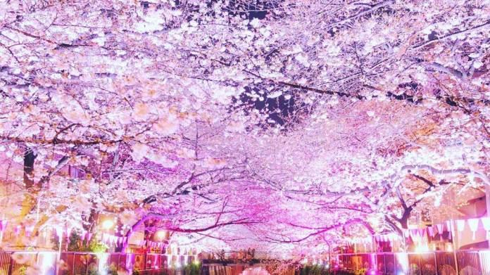 目黒川桜祭りライトアップ